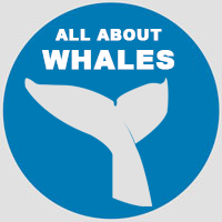 ALL ABOUT WHALES