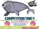 Instagram competition: Finding Wendy the Whale Hunt